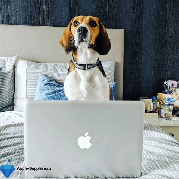 MacBook не выходит в интернет